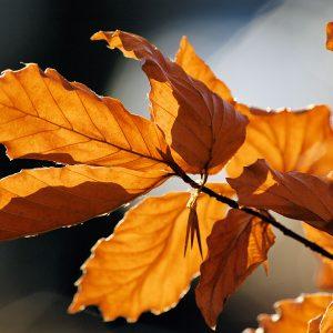 Autumn_leaves_sceenario