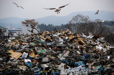 epa02727213 Seagulls fly over a waste disposal in Kesennuma, Miyagi Prefecture, northeastern Japan, 11 May 2011. The 11 March earthquake and tsunami turned entire coastal cities into rubble creating an estimate amount of 100 million tons of waste. Such an amount will have an impact of the recovery speed and on the environment of the affected area.  EPA/FRANCK ROBICHON